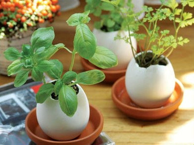 Egglings mini herb garden