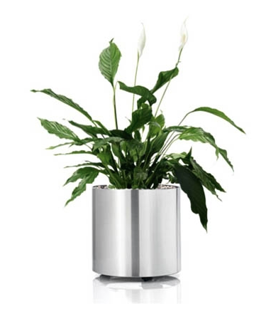 Blomus Greens Stainless Steel Planter